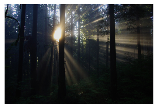 Lower Griffen - Morning Light
