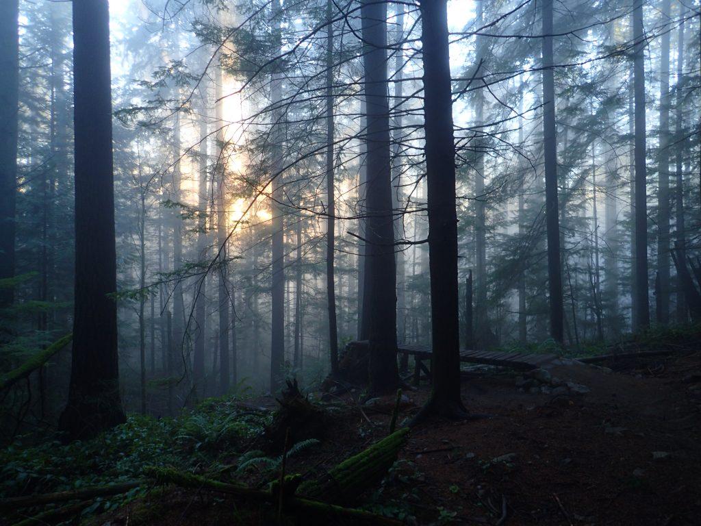 Wood feature on John Deer (Photo: Penny)