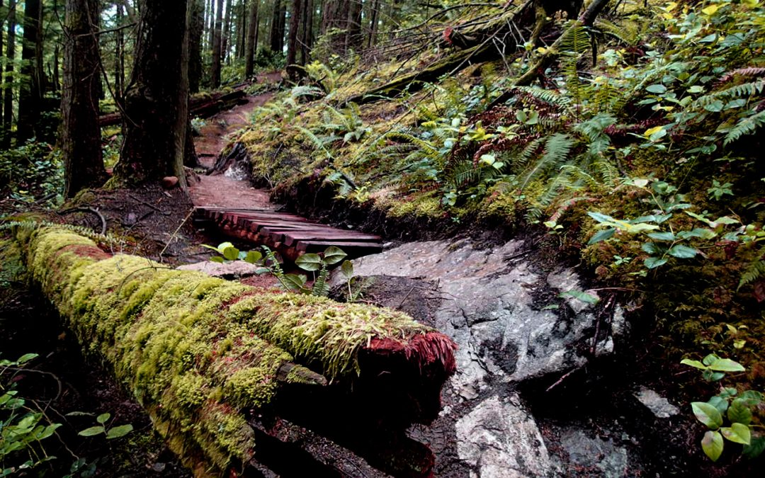 NSMBA announces new advanced trail on Mt. Seymour