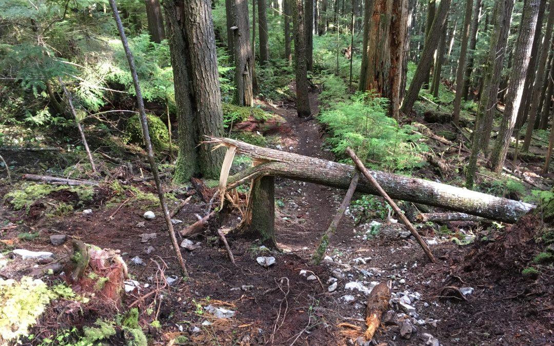 Trail Academy Q&A