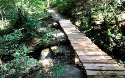 August Trail Update