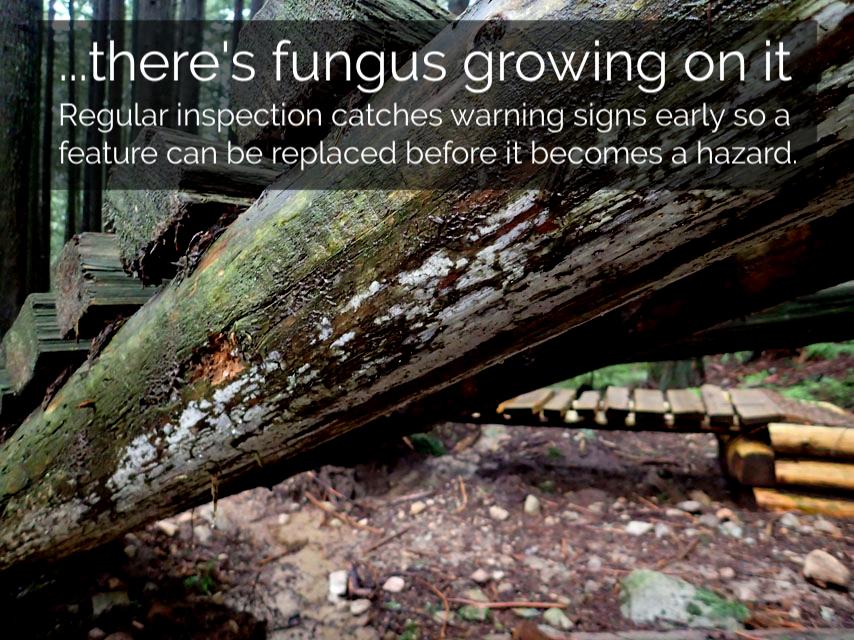 fungus-stringer-corkscrew