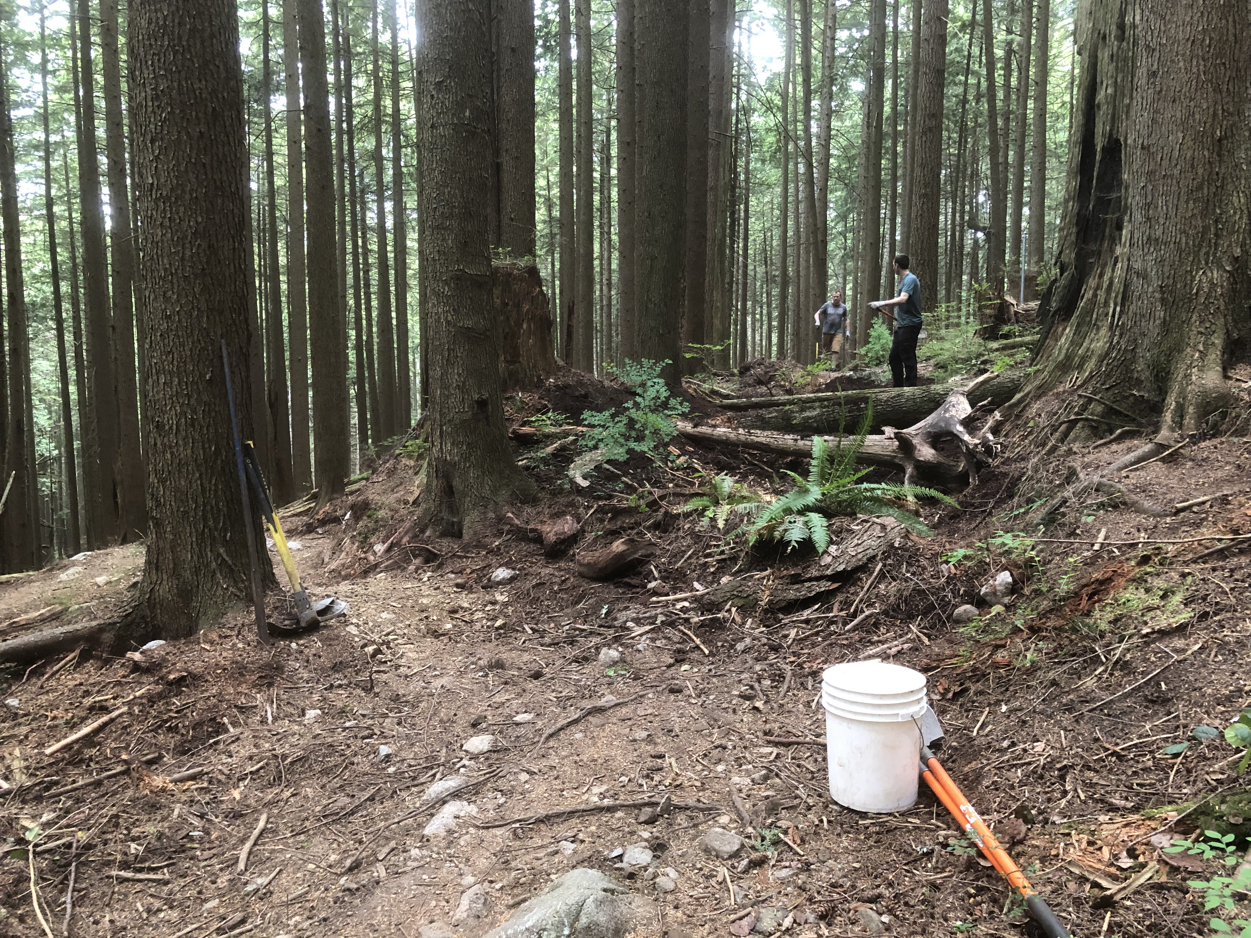 A trail winding through the forest with a bucket and shovel lying on the ground.