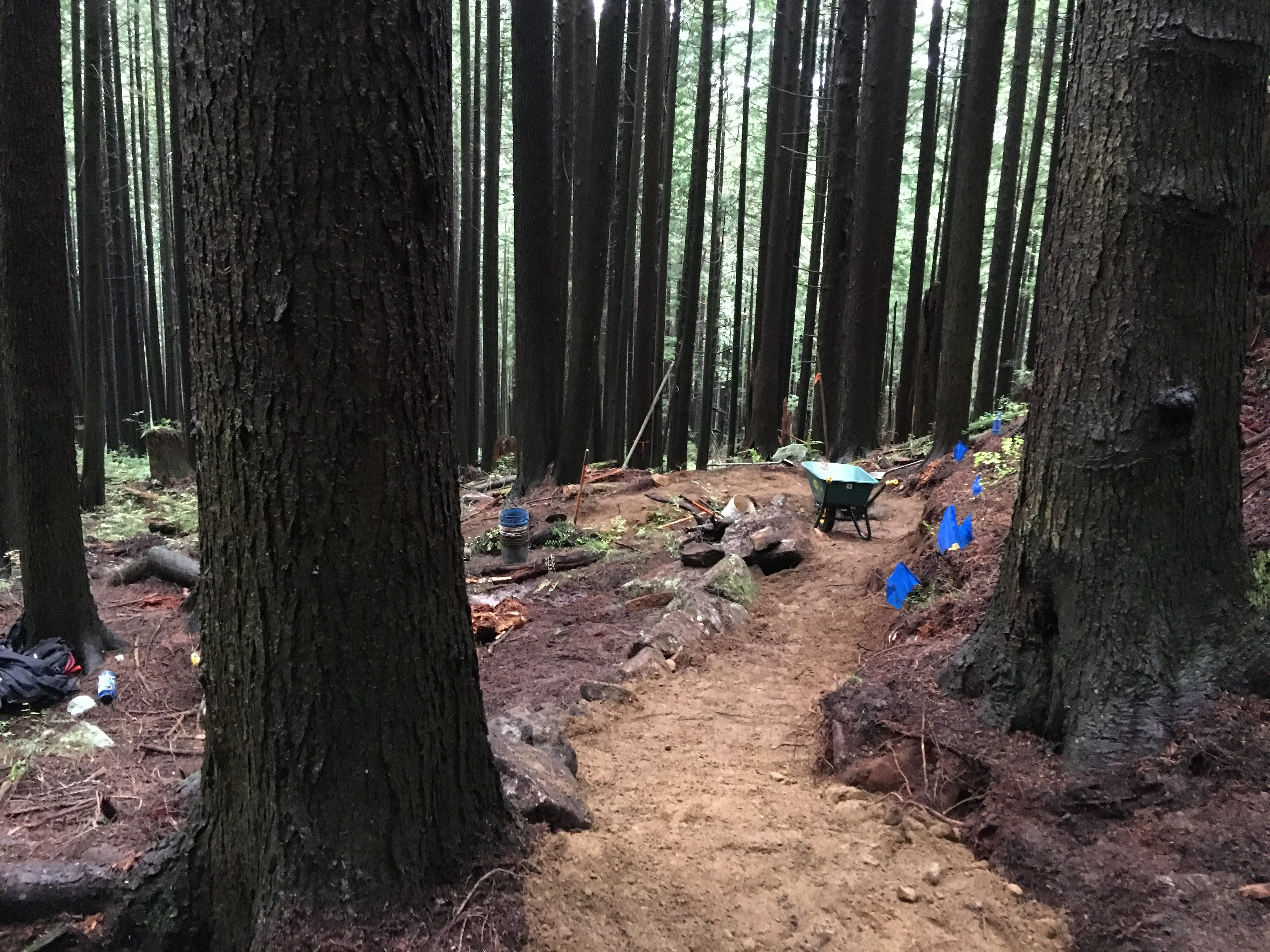 The new trail twisting through the trees