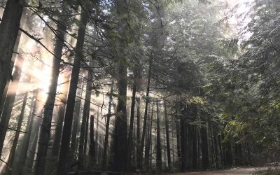 Fromme Parking Lot Closure – Dec 7th-11th