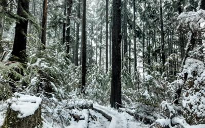 January 2020 Trail Update