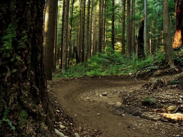 Trail Jargon of the Month: Berm