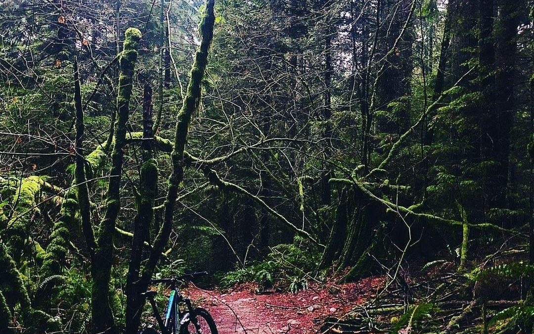 Seymour Strategic Trails Plan – Recap from the DNV Council Workshop