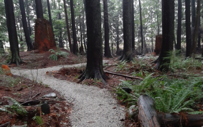 Greenwood Park Trails